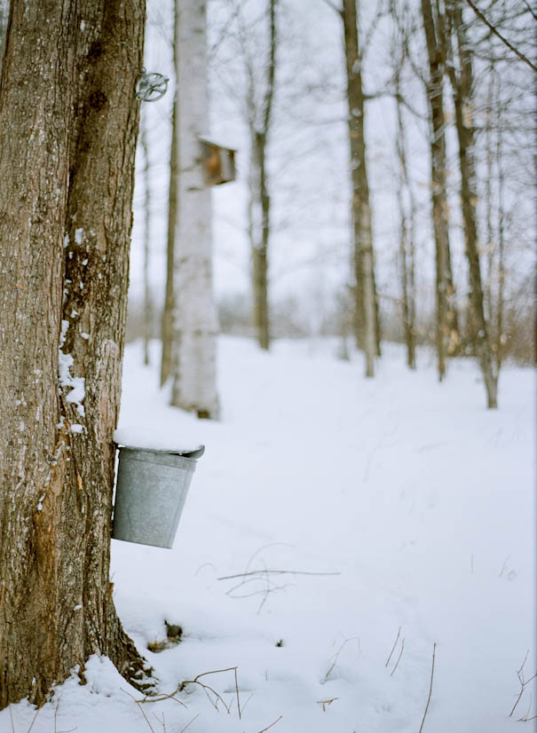 sap bucket new hampshire maple syrup