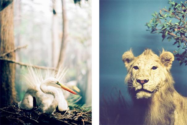 lion_pelican